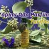 Organik Oda Kokusu – Parfümü Nasıl Yapılır