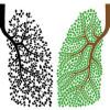 Akciğerleri Temizleyen Bitkiler Neler
