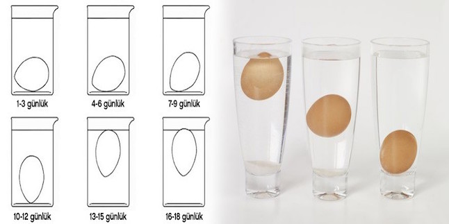 suda-yumurta-tazelik-testi-880x320