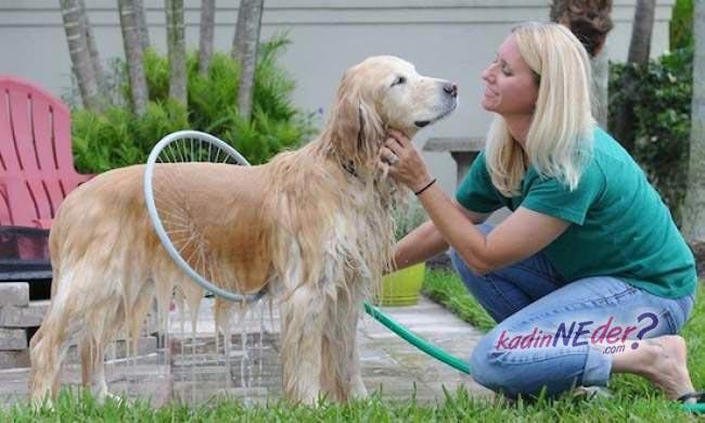 köpek yıkama hortumu
